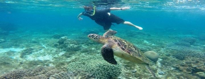 Bij Apo Island kunt u snorkelen met zeeschildpadden