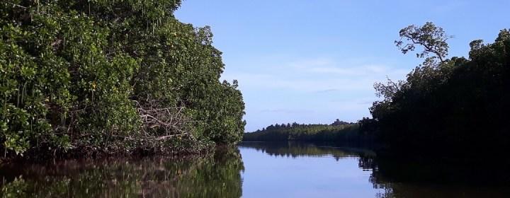 Mangrove Rivier - Port Barton, Palawan, Filipijnen