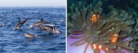 Dolfijnen Spotten & Snorkelen bij Balicasag Eiland - Bohol, Filipijnen