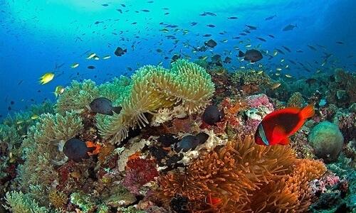 Snorkelen Balicasag Island Bohol Filipijnen