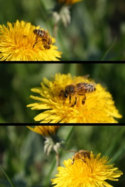 Artistic: Bees