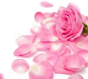 petali-di-rosa