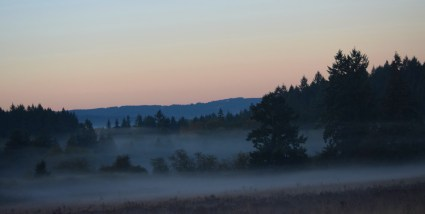 fog in the meadow 3