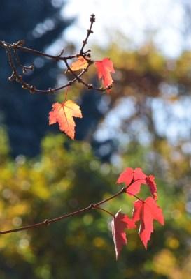 last leaves 11-8-14