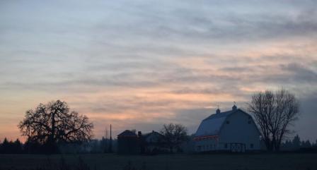 barn with Christmas lights at dawn 12-2-14