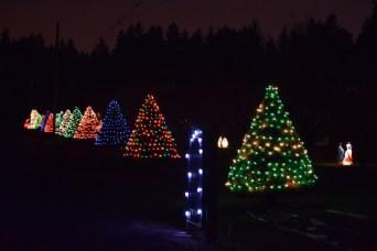 line of Christmas trees 1-2-15