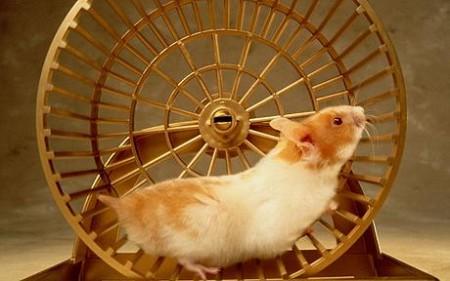 hamster_wheel