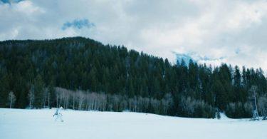 Jeremy Renner Wind River
