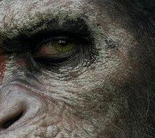 PLAKAT – Ewolucja planety małp