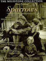 Sparrows 5