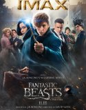 Fantastic Beasts and Where to Find Them 2 (2018) Online Subtitrat in Romana