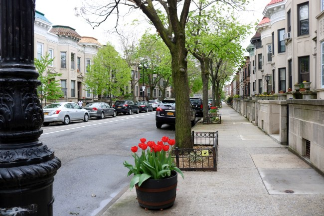 Spring flowers and New York brownstones in May 2017