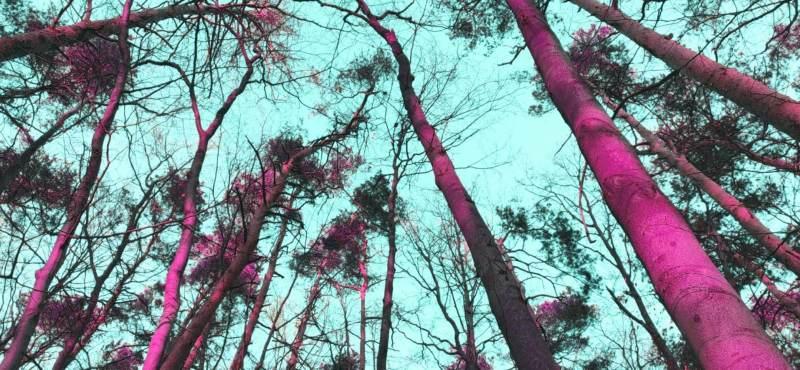 Lomography Film filters for Instagram