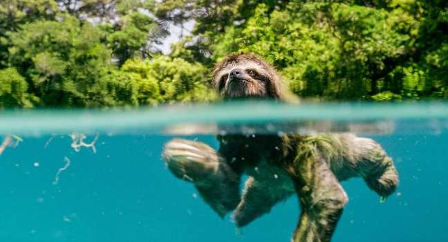 Lenochod a jeho plavání za láskou ve filmu Earth: Den na zázračné planetě