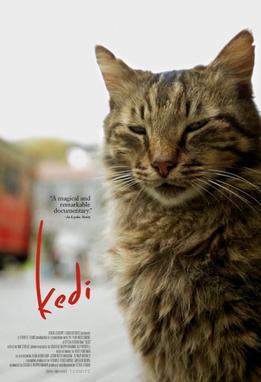 Kedi-film-poster