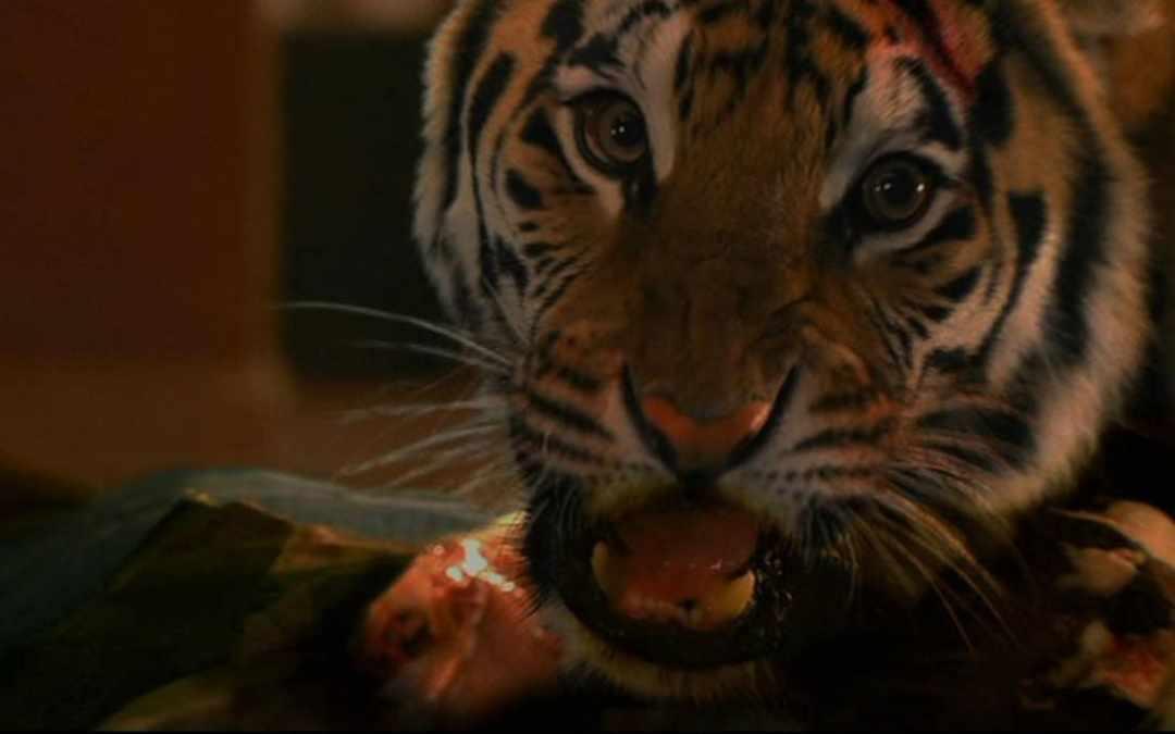 Burning Bright (2010) – Real Tiger Facts!