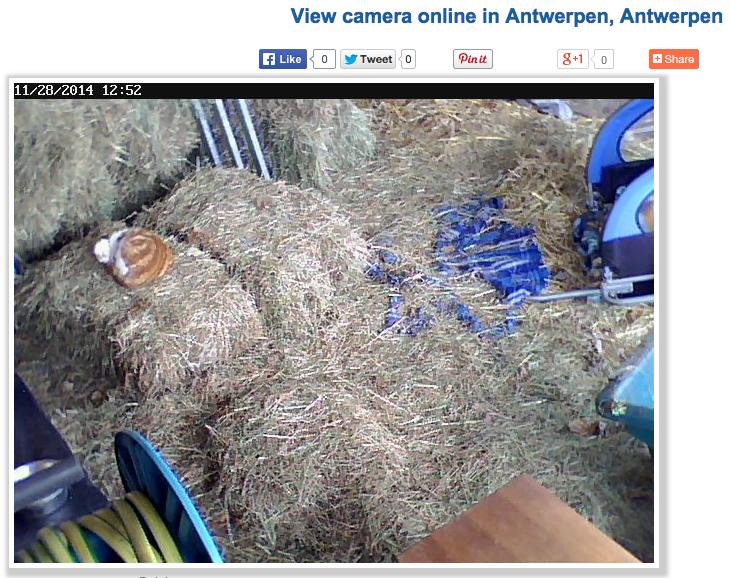 View_Linksys_camera_in_Belgium__Antwerpen