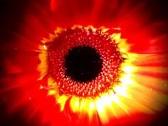 Eye of the Gerber