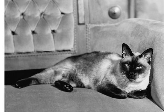 Bob Mizer, Siamese cat, 1945 (Courtesy Bob Mizer Foundation)
