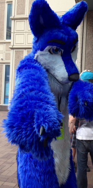 Cool blue fox!