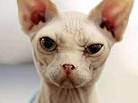 wrinkly_cat_big.jpg
