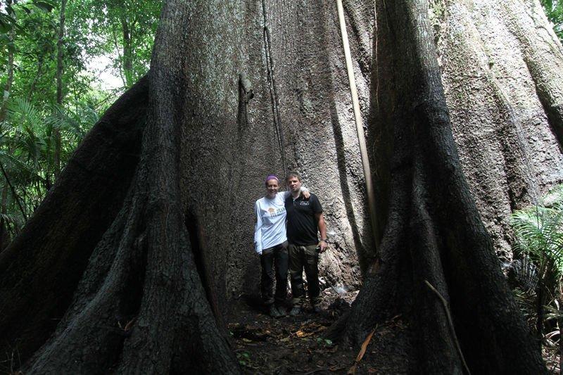 Sumaúma tree