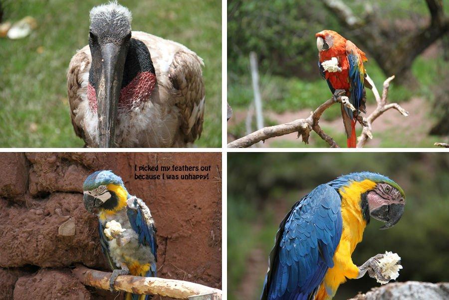 Ccochahuasi-Animal-Sanctuary