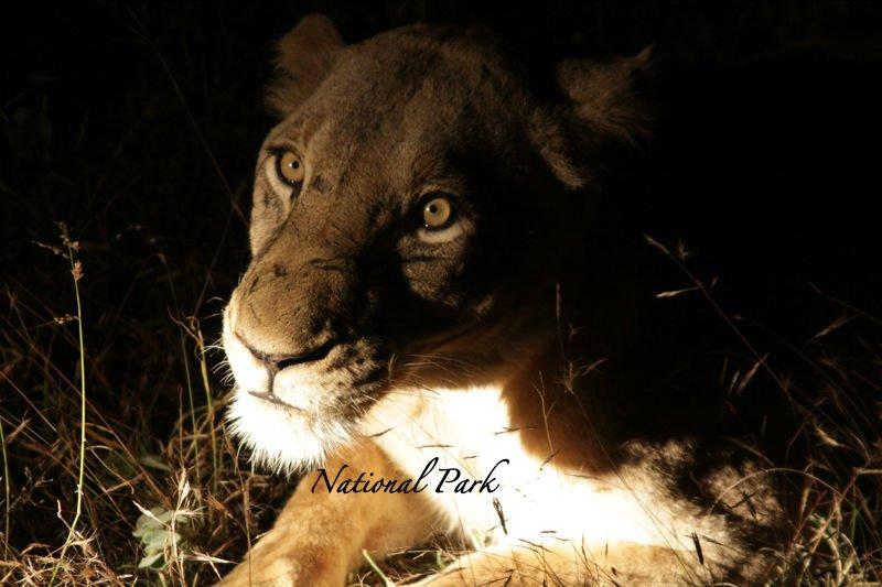 national-park-002