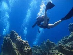 Diving Turkey