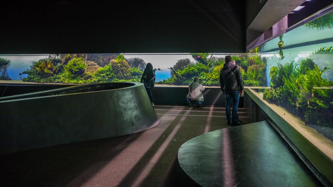 The temporary exhibition at the oceanarium in Lisbon