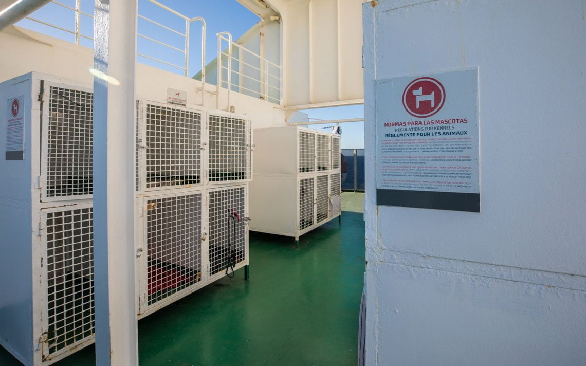Pets at the ferry from Huelva to Lanzarote