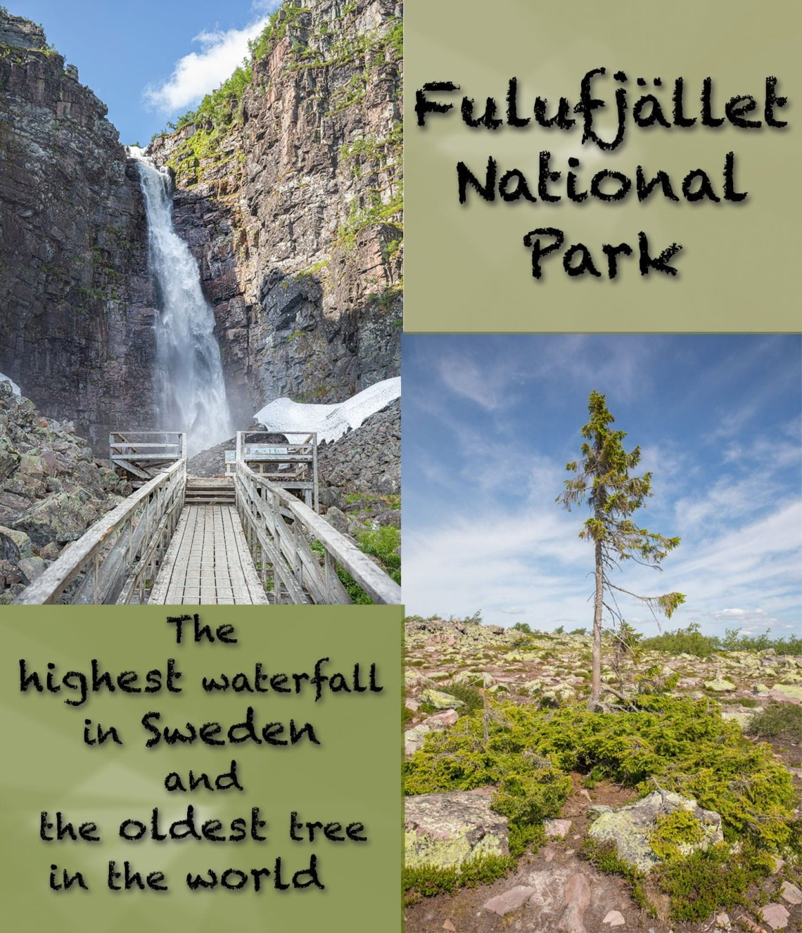 Worlds oldest tree and highest waterfall in Sweden