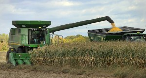 A farmer drives a combine in Clear Lake, Minnesota, in October. Some House observers foresee a number of changed priorities in the agriculture realm now that Republicans control the lower chamber. (AP file photo: St. Cloud Times)