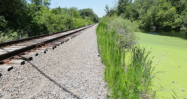 The rail corridor alignment for the Blue Line Extension project may have expensive wetland issues. A large pond is within the right of way for the project near a proposed station at Golden Valley Road in Golden Valley. (Staff photo: Bill Klotz)
