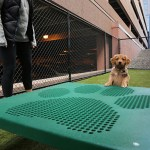 """Arcata actively welcomes pooches and other pets. A basement area has a """"Laundromutt"""" pet tub for dogs next to this narrow off-lease dog park with an agility training course."""