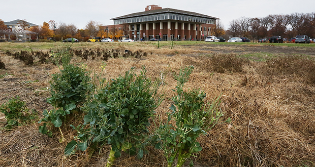 A 118,000-square-foot community center is proposed for this property near Blaine's city hall. The site is on Town Square Drive Northeast in the southeast quadrant of Radisson Road and 109th Avenue Northeast. The project hinges on passage of a $29.3 million bond referendum. (Staff photo: Bill Klotz)