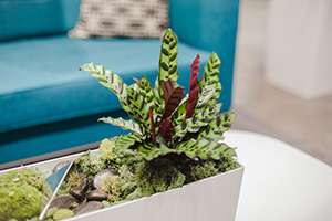 """Plants have helped """"soften"""" the office's design and improved indoor air quality, said SVL Vice President Jim Lubratt. (Submitted photo)"""