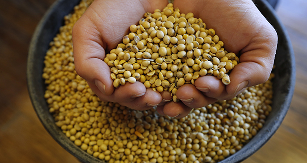 Although Minnesota's exports grew 6.5 percent in the past 12 months, some sectors, such as soybean farming, have struggled in the face of new international tariffs. (AP file photo)