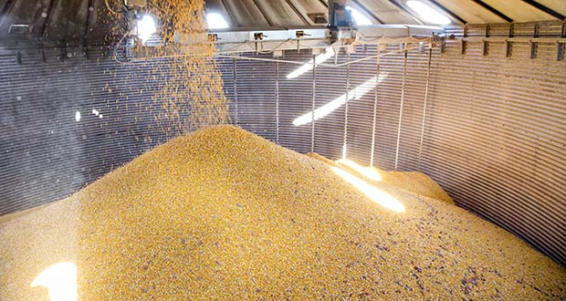 Ethanol consumption accounts for some 39% of U.S. corn production. (Bloomberg file photo)