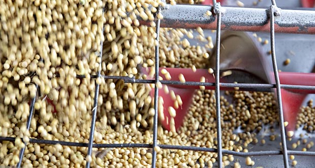 The trade dispute with Washington exposed Beijing's vulnerability when it comes to food imports -- especially the soybeans needed to feed its massive herd of livestock -- and the Communist Party leadership will now do all it can to wean itself off the U.S. (Bloomberg file photo)