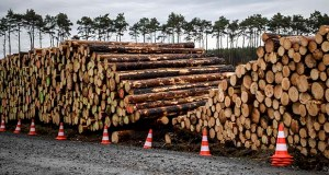Cleared trees lie stacked on the entrance to the site for the planned Tesla factory near Gruenheide, Germany, Sunday, Feb. 16, 2020. (Britta Pedersen/dpa via AP)