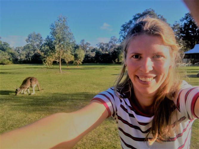 Australië kangaroo yanchep national park