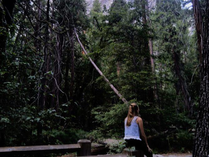 Overlijden partner bos neergevallen boom