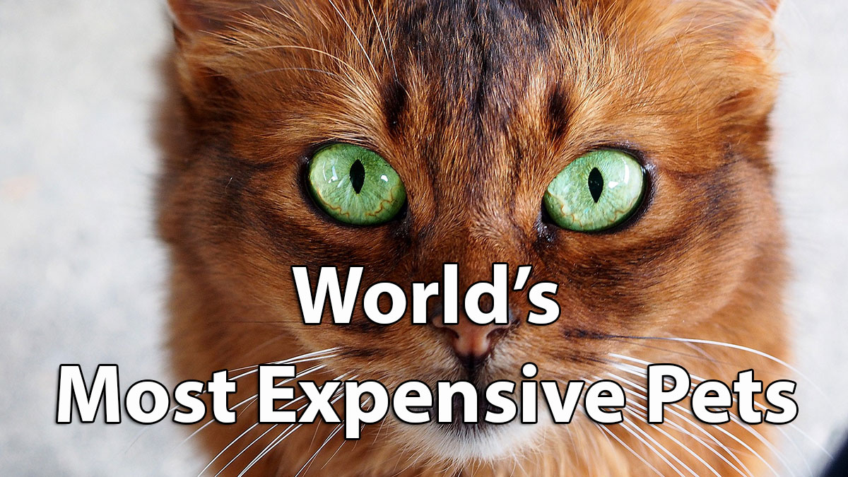 10 Most Expensive Pets In The World Do Racing Horses Cost