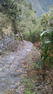 More of the trail.