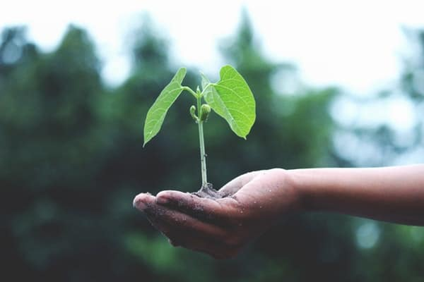 Small tree in hand representing growth of a young professional at a large organization
