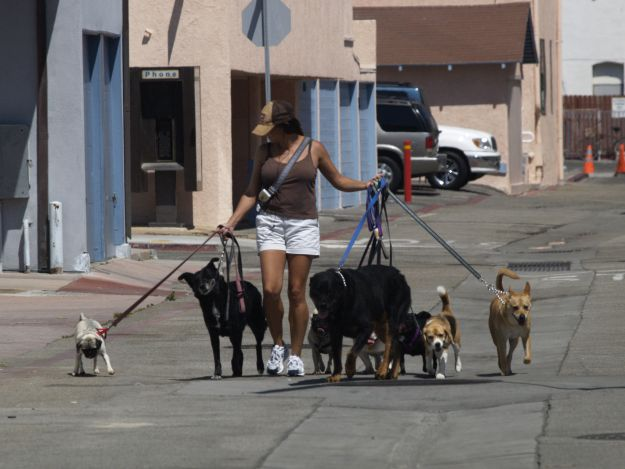 Walk Dogs | Making Extra Money In 20 Foolproof Ways