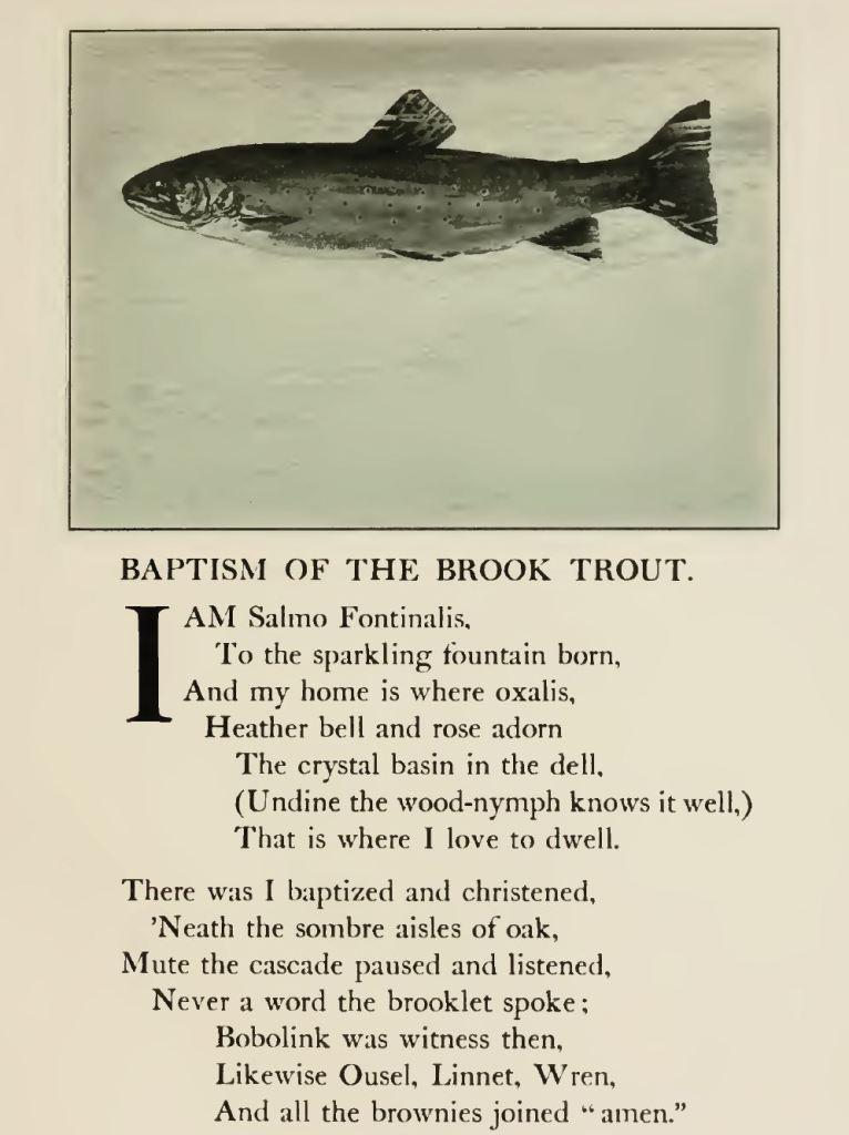 Brook Trout Baptism