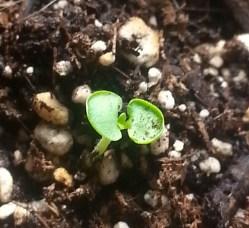 mas y mas fotos de semillas 2