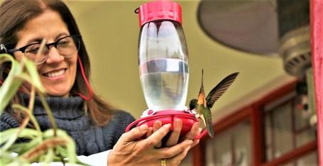colibries-13